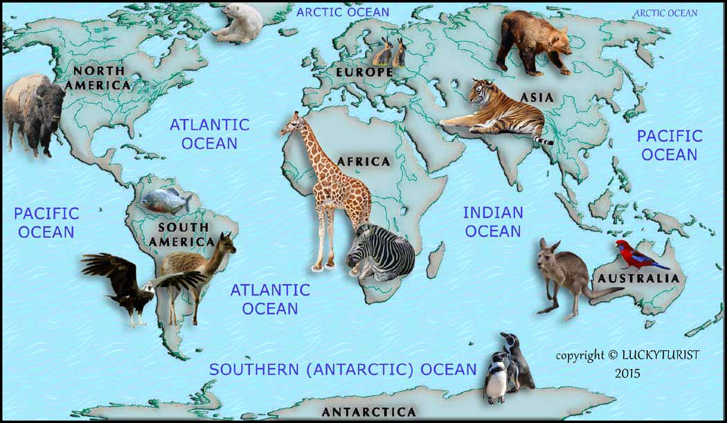 Continents Of The World - Map showing continents and oceans
